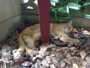 伊HP)公園 猫2